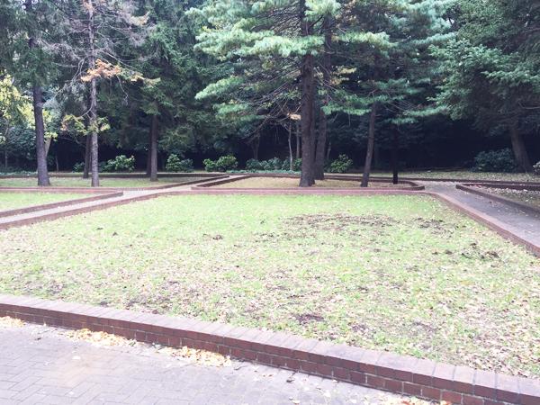 1964東京オリンピック記念樹木生育不良(代々木公園)