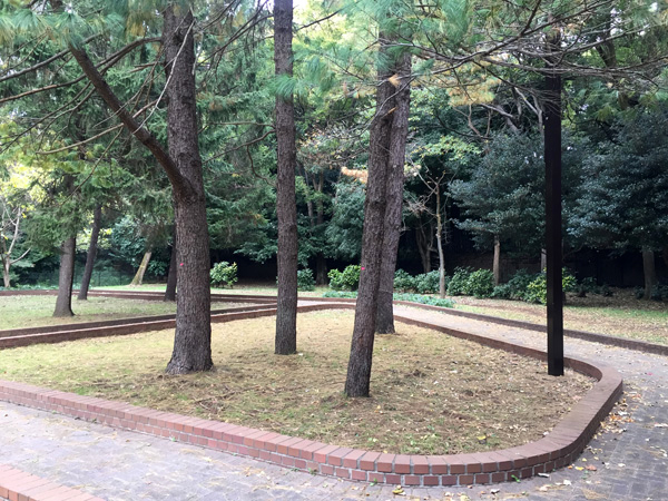 1964東京オリンピック記念樹木(代々木公園)